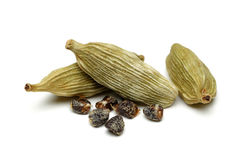 Green cardamom Royalty Free Stock Photos