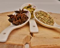 Green cardamom, star anise and fennel seeds in white ceramic spoon. On a cut down a tree Stock Photography