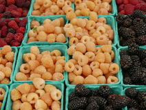 Cartons of mixed berries. Green cardboard cartons of blackberries and red and golden raspberries Royalty Free Stock Image