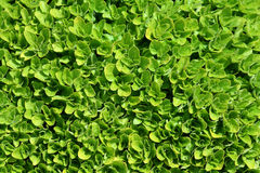 Green carpet Stock Images