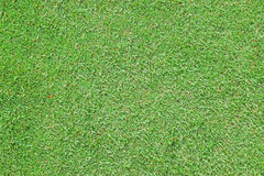 Green carpet grass stock photo
