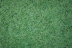 Green carpet texture, closeup Royalty Free Stock Photos