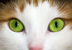 A green cat eye Stock Image
