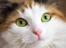 A green cat eye Stock Images