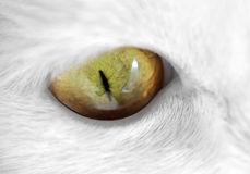 Green Cat Eye Macro Stock Photo