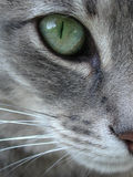 Green Cat Eye Macro Close Up. A green eye and partial face of a grey cat in macro close up detail with fur and whiskers royalty free stock photos