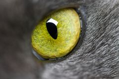 Green eye of a cat close up. Green cat eye wide open close-up full frame stock photo