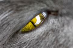 Green eye of a cat close up. Green cat eye wide open close-up full frame royalty free stock images