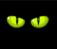 Green cat eyes. Green wild cat eyes over black background Royalty Free Stock Image