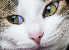A green cat eyes Royalty Free Stock Images