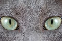 Green cat's eye Royalty Free Stock Images