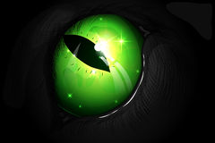 Green cat`s eye. Vector illustration of green cat eyes against a black coat Royalty Free Stock Image