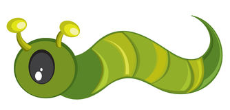 Green caterpillar Stock Photography