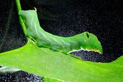 Green caterpillar Stock Image