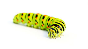 Green caterpillar Royalty Free Stock Photography
