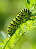 Green caterpillar. On natural background Stock Photography