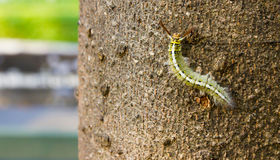 Green caterpillar on bark of tree Stock Images
