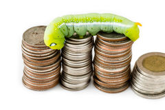 Green caterpillar climbing on Thai coins Stock Photo