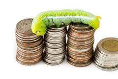Green caterpillar climbing on Thai coins Stock Photo