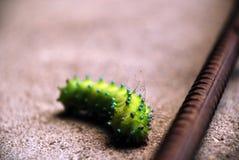 Green caterpillar crawling through sand along the rebar stock image