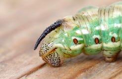 The green caterpillar Royalty Free Stock Image