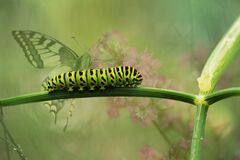 Green Caterpillar on Green Plant Stem royalty free stock photo