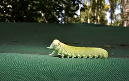 Green caterpillar on tent royalty free stock photo