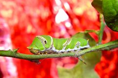 Green caterpillar on tree. With background Stock Photos