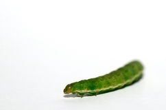 Green caterpillar on white Royalty Free Stock Photography