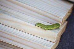Green caterpillar. On wooden slats Stock Image