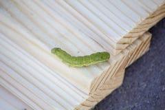 Green caterpillar. On wooden slats Stock Photo