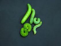 Green caterpillars Royalty Free Stock Images