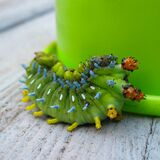 Green Catterpillar Stock Photography