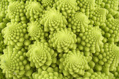 Green cauliflower Royalty Free Stock Photos