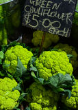 Green cauliflower Royalty Free Stock Photography