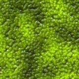 Green caviar Royalty Free Stock Photography