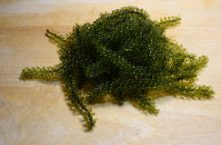 Green caviar Stock Photography