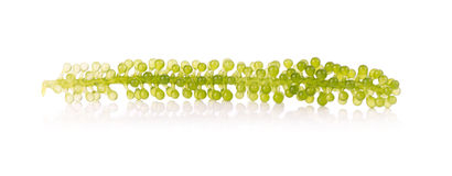 Green Caviar on white background Stock Photography