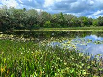 Free Green Cay Wetlands Royalty Free Stock Image - 143654116