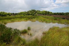 Green Cay Wetlands Royalty Free Stock Image