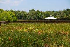 Green Cay Wetlands Stock Photos
