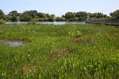 Green Cay Wetlands Royalty Free Stock Photos