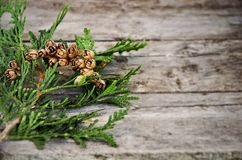 Green cedar branch on table Royalty Free Stock Photo