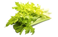 Green celery royalty free stock image