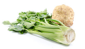 Green celery and celery root. Isolated on white Royalty Free Stock Image
