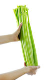 Green celery Royalty Free Stock Photography