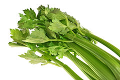 Green celery leaves Royalty Free Stock Photos