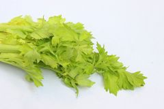 Green celery leaves isolated royalty free stock photo