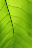 Green cell structure texture of nature leaf Stock Photos