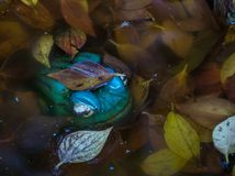 Ceramic green frog isolated in a pond. A green ceramic frog isolated in a pond with water and fallen leaves image with copy space in landscape format stock photos